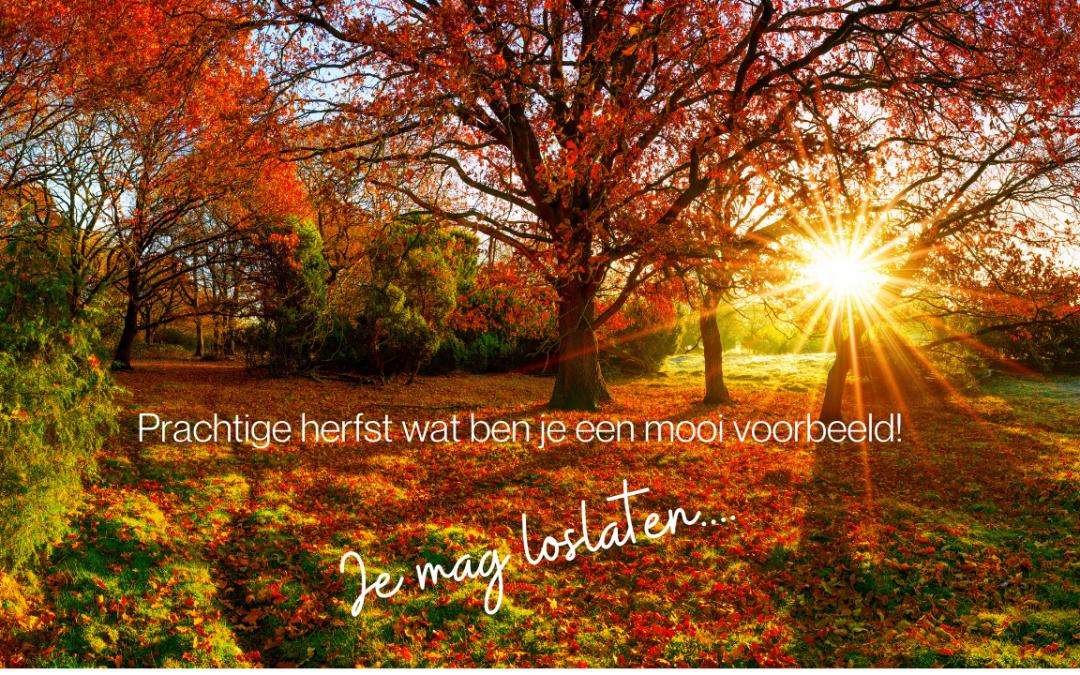 Herfst is de tijd van loslaten